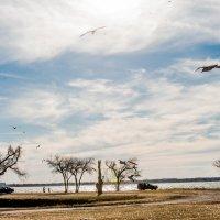 На озере в конце января :: MVMarina