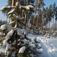 Тропинка в лесу :: Olga Golub