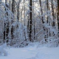 Зимний лес! :: Наташа Шамаева
