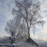 Красоты зимы :: BoxerMak Mak