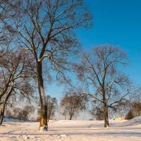 мороз и солнце :: Александр Есликов