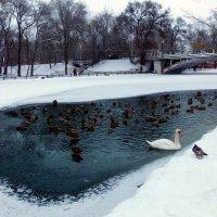 Озеро на замерзшем пруду...! :: Наталья