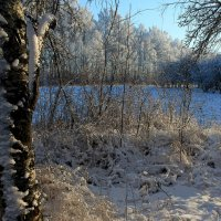 После снегопада :: Наталья Лунева
