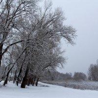 Морозный январь :: Dr. Olver  ( ОлегЪ )