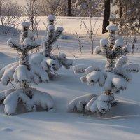 Стройные,нарядные сосенки стоят... :: Александр Попов