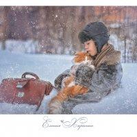 Холодные коты :: Еления Харченко