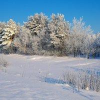 В зимнем убранстве :: Валерий Шибаев
