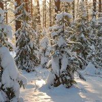 Зимний лес :: Валерий Толмачев