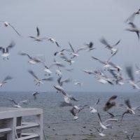Море :: Алексей Василюк