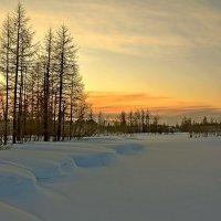 Вечерний лес... :: Витас Бенета