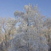 Зимние узоры :: JulO Юлия