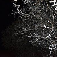 Темень...в темном месте города Северодвинск, и в темнный вечер)) :: Михаил Поскотинов