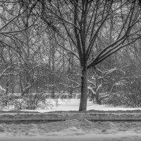 Зимушка-зима :: Рома Григорьев