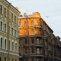 Санкт-Петербург. :: Владимир