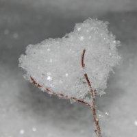 Люблю снег :: тётя Саша Моя