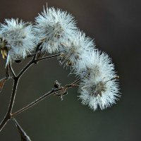 Зимние цветы :: Tatiana Belyatskaya