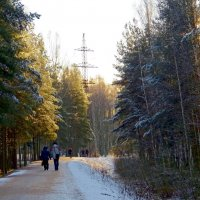 Зимняя дорога :: Вера Щукина