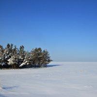 Зима :: Larissa Sergeeva