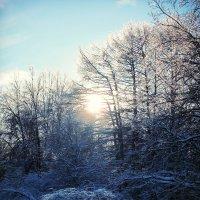 Зимний лес* :: Мари ^_^ !