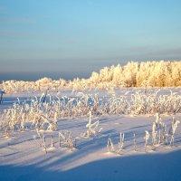 Морозный день :: Виталий Житков