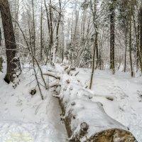 А медведи ушли спать до весны :: Valeriy Piterskiy