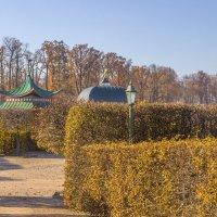 Крыши, остатки старой жизни :: Gennadiy Karasev