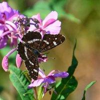 Лето,цветок,бабочка :: Paparazzi