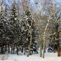 Деревья в зимнем серебре. :: Валентина ツ ღ✿ღ