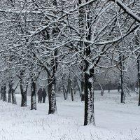 Зимняя прогулка. :: Валентина ツ ღ✿ღ