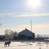 Мороз и солнце :: Анна Сыслова