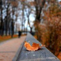 Осень. :: Стас