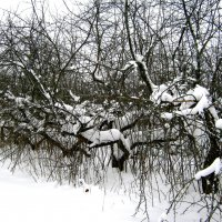 Яблоневый сад зимой. :: Борис Митрохин