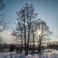 Пейзаж зимний :: Андрей Дворников
