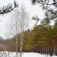 Днем в лесу :: Ростислав