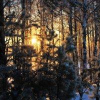 Солнце согревает зимний лес :: Евгений Карелин
