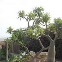 Растительность на Мёртвом море :: Надежда