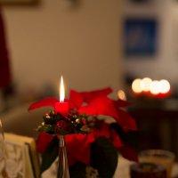 В гостях на Рождество :: Gotardo Ro