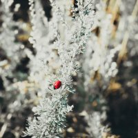 Красное на белом :: Виктория Воробьёва