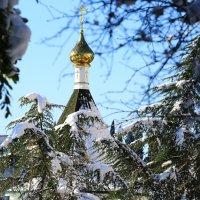 Зима в Сочи :: valeriy khlopunov