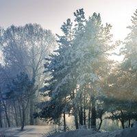 Зимой... :: Кирилл Богомазов