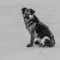 Тот же пёс, позирует..))) :: Валентин Щербаков