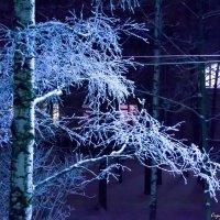 ночная ветка :: Валерий Смирнов