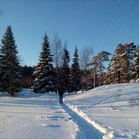 Январь в поселке Лесное :: Сергей