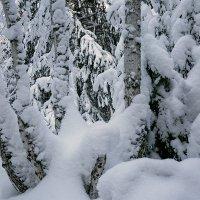 Лыжня :: Александр Рейтер