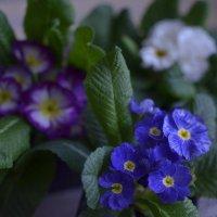 В ожидании весны :: ЕСЕНИЯ ♥
