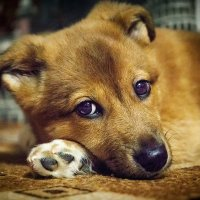 Собака отдыхает :: Дмитрий Стёпин
