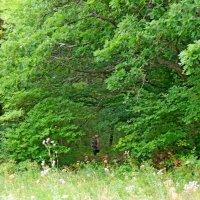 лес :: Люша