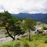 Вдоль берега реки Чемал :: Наталия Григорьева