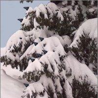 Зима застала врасплох :: Григорий Кучушев