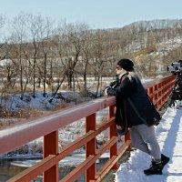 В поисках журавлей на Хоккайдо :: Tatiana Belyatskaya